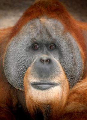 Kriminelle Berichterstattung über Cannabis-Sucht bei Affen