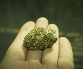 drogentest auf cannabis drogen aufkl rung. Black Bedroom Furniture Sets. Home Design Ideas